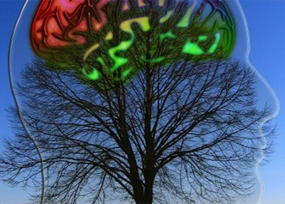 corpo mente ambiente